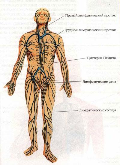 увеличенные лимфоузлы в грудной клетке